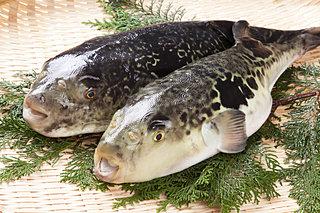 2月9日は「フグの日」。猛毒と美食の危険で甘い関係とは?