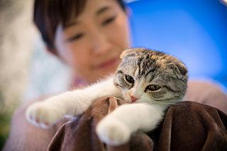 大人気!珍しい動物と触れ合えるカフェ~男性お一人様でも寛げる猫カフェまで!今注目のアニマルカフェ♪