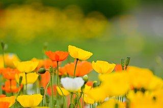 春を満喫!花畑や花摘みが楽しめる「道の駅」4選