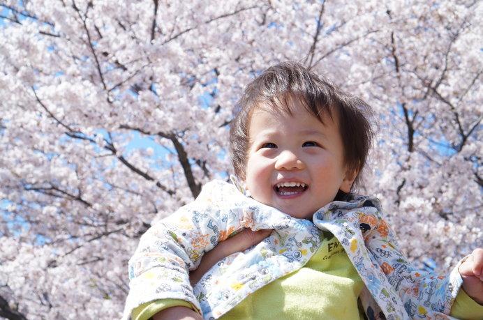 桜の下でピクニックはいかが? ※画像はイメージ