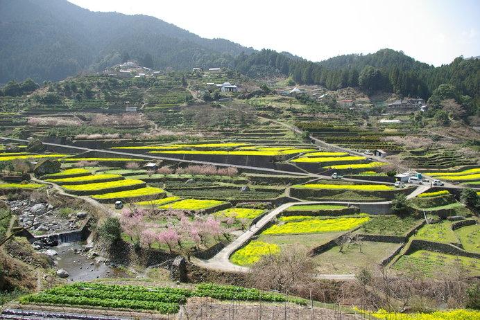 なつかしい山里の風景がひろがる「江田菜の花の里」