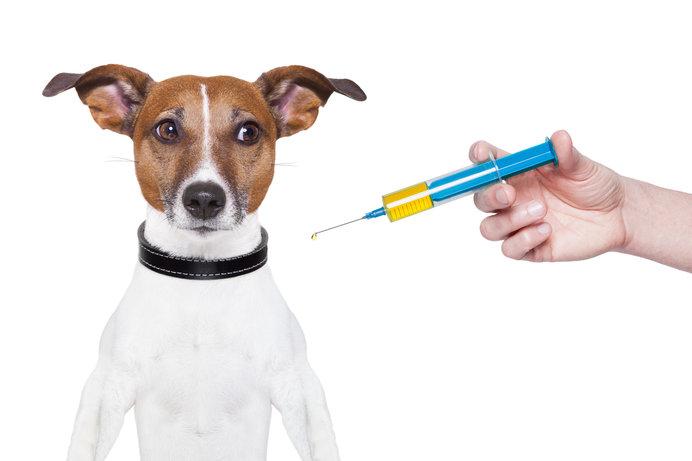 混合ワクチン接種は必要?〈接種費用や頻度・メリット・デメリット〉
