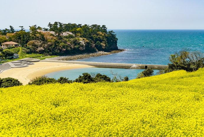 海からの風が菜の花の香りを優しく運んでくれる「長崎鼻リゾートキャンプ場」