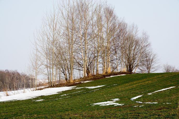 今年は雪解けが早い北海道。早くも積雪0の地域が続出