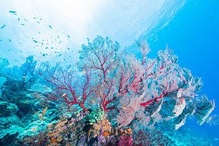 3月5日は「サンゴの日」。サンゴってどんな生き物なの?