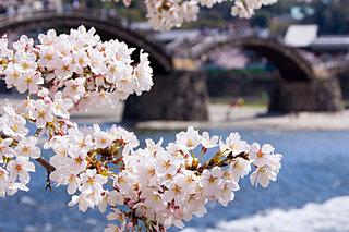 中国地方でお花見するならココへ♪オススメの桜名所をご紹介!