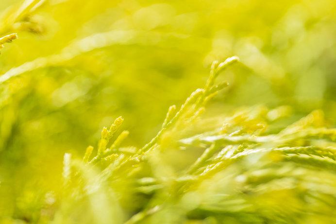 「知って得する季語」──「風」はなぜ「光る」のか?_画像