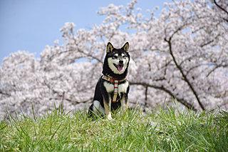 四国地方でお花見するならココへ!桜の名所を厳選してご紹介