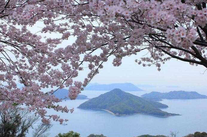 桜のピンクと瀬戸内海の青、島々の緑……インスタ映え写真が撮り放題♪