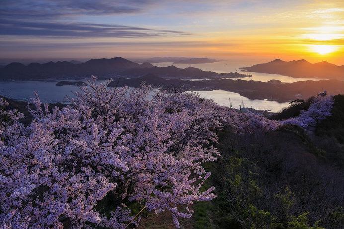 別名「岩城富士」とも呼ばれる「積善山」では、約3000本の桜が咲く