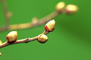 春はデトックスの季節!「肝臓」をいたわる食べ方で、新陳代謝を促しましょう