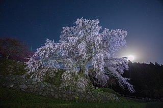 3月18日は何故「精霊の日」?―和歌と彼岸と言霊の関係を探ります