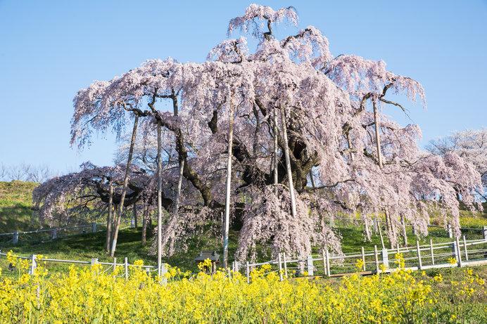 桜の季節到来!お花見の名所&道の駅4選!