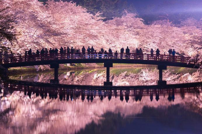 弘前公園のライトアップ