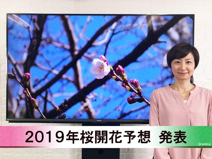 【動画で解説】日本気象協会から「第5回 2019年桜開花予想」発表!