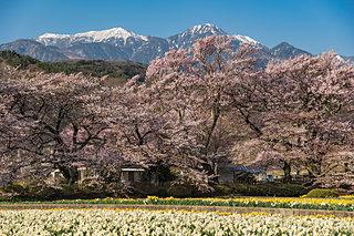 桜の季節到来!お花見の名所&道の駅4選!その2