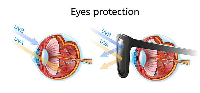 UVカット機能がついたサングラスは、目の深くに入る紫外線から眼を守ってくれます
