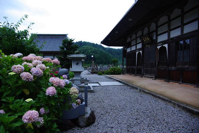 色とりどりの約50種1500株の紫陽花が咲く「全長寺」