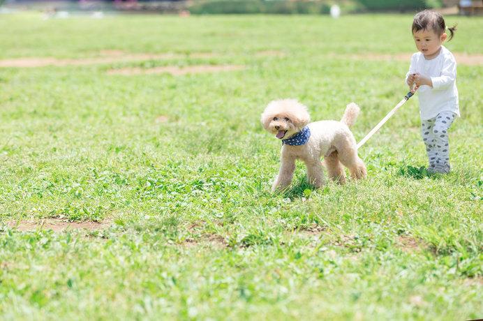 飼い主さんとのお散歩は、ワンちゃんたちにとって至福のときです!