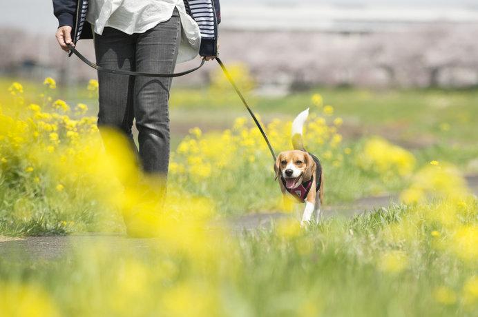 お散歩は飼い主さんにとってもワンちゃんにとっても、健康維持に最適!