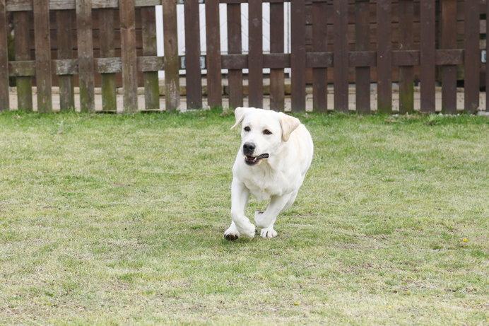 大型犬はドッグランを定期的に利用すると、飼い主さんの負担を軽減できます!
