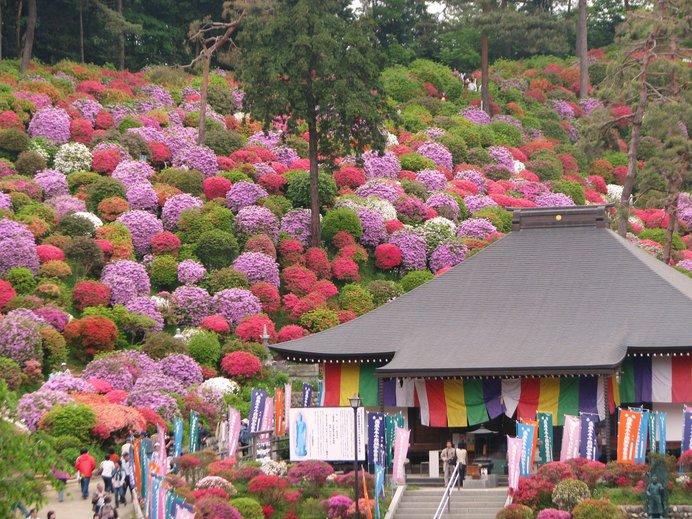 塩船観音寺は色とりどりのツツジの見事さから「花の寺」とも呼ばれる