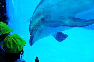 GWに行きたい絶対おすすめの水族館、厳選4スポット!
