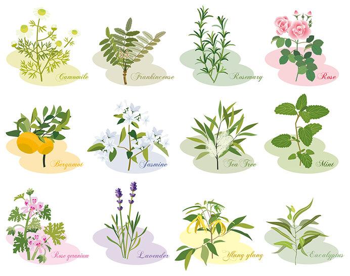 自然の植物から作られているアロマオイルの数は数百種類にのぼります