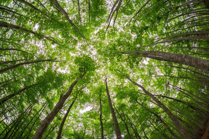 新緑の森林浴!ブナ美人、花や鳥、馬と一緒にリフレッシュしよう♪関東甲信越の森林浴スポットは?