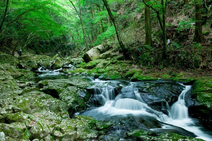 新緑の森林浴!マイナスイオンたっぷりの滝や竹林にでかけよう♪近畿の森林浴スポットは?