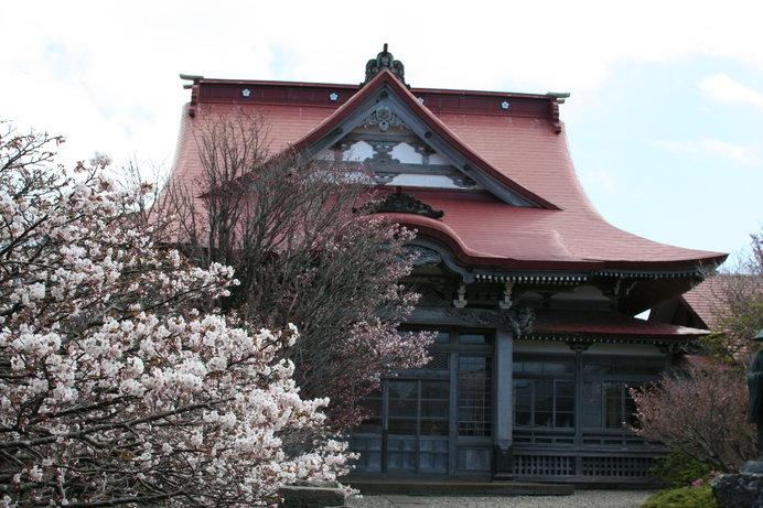 清隆寺のチシマザクラ