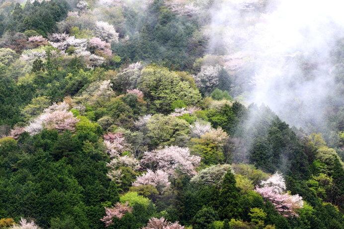 二十四節気は「穀雨(こくう)」に、春も終わりへ近づきました