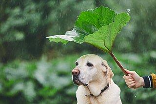 梅雨の時期に注意したい愛犬トラブルと、愛犬が梅雨を快適に過ごすコツ