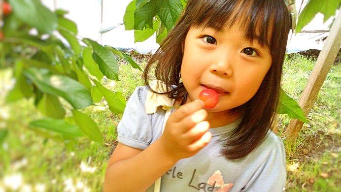 子どもでも簡単に摘み取れてパクパク食べやすいさくらんぼ♪