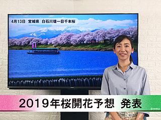 【動画で解説】日本気象協会から「第9回 2019年桜開花予想」発表!