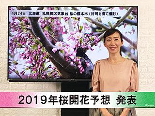 【動画で解説】日本気象協会から「第10回 2019年桜開花予想」発表!