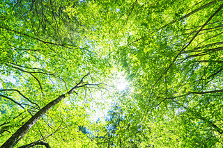 新緑の初夏。「フィトンチッド」の恩恵にあずかろう‼