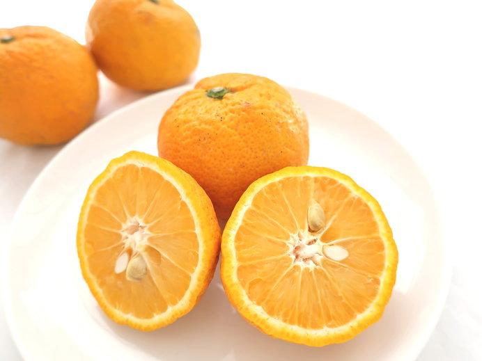 北山村にしかない「じゃばら」という柑橘類