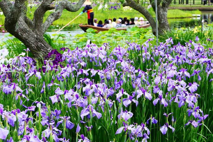 水郷佐原あやめパークの舟めぐり(千葉県)