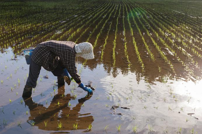 「梅雨」の意味と夏の雨の季語