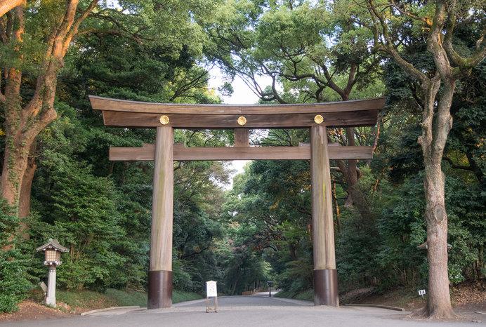 都会の喧騒を忘れるような「明治神宮の森」