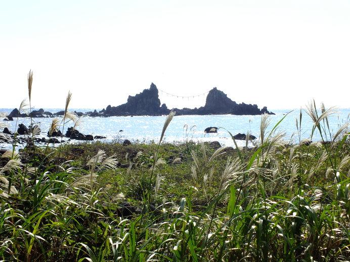 原生林が広がっている「真鶴岬」