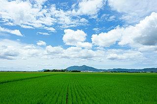 二十四節気「芒種(ぼうしゅ)」。イネ科植物の天下、そのはじまりの季節です