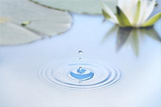 「知って得する季語」──夏が見頃の水生植物