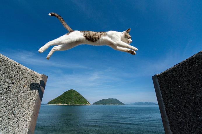 佐柳島を一躍有名にした「ジャンプネコ」