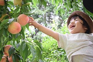 フルーツ狩りで、旬のフルーツを楽しもう!