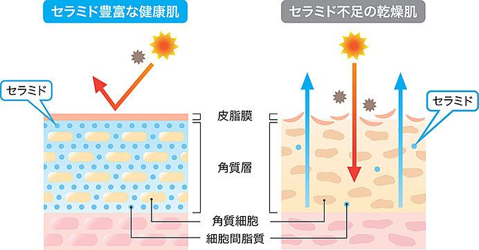 肌の中の水分は、紫外線によってどんどん蒸発してしまいます