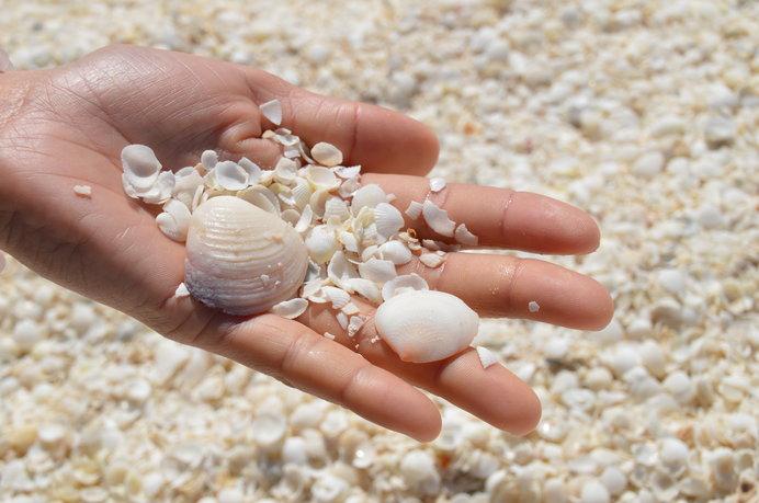 シェルビーチを覆いつくす無数の貝殻