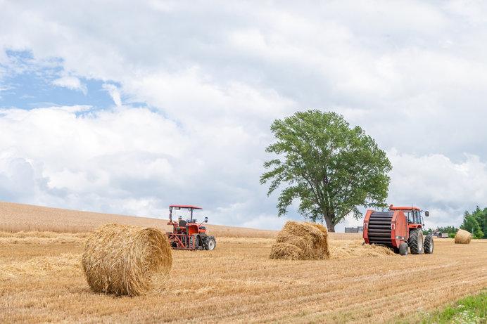 麦わらロールの直径は1.5m。重さは350kg。