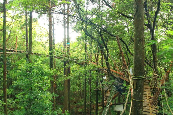 照葉樹林の中、全長300メートルのボードウォークを歩く「キャノピーウォーク」